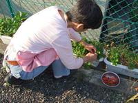 Wildstrawberry21
