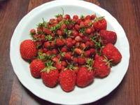 Wildstrawberry22